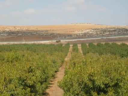 Le vin du désert